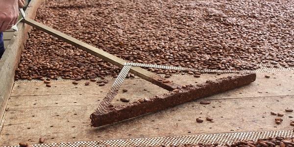 فروش کاکائو تلخ