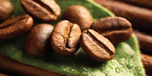مراکر فروش دانه قهوه و کاکائو