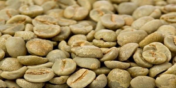 فروش دانه خام قهوه