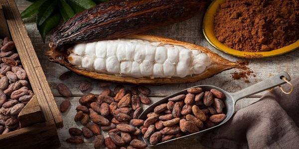 نمایندگی فروش پودر کاکائو ایرانی