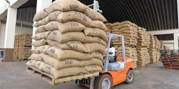 مراکز خرید پودر کاکائو