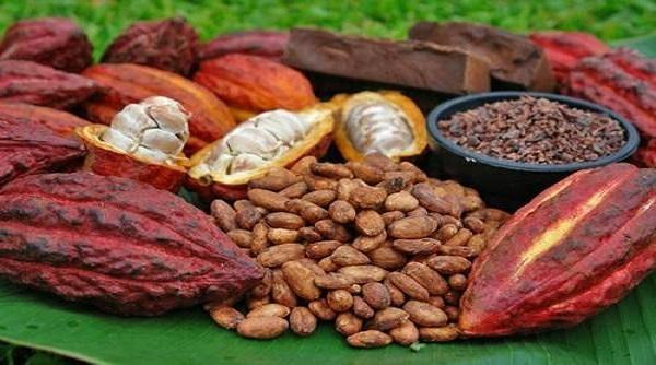 بهترین پودر کاکائو خالص را خرید کنید