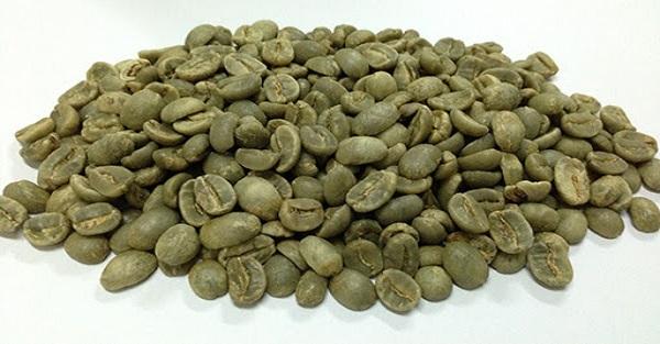 قیمت فروش دانه خام قهوه